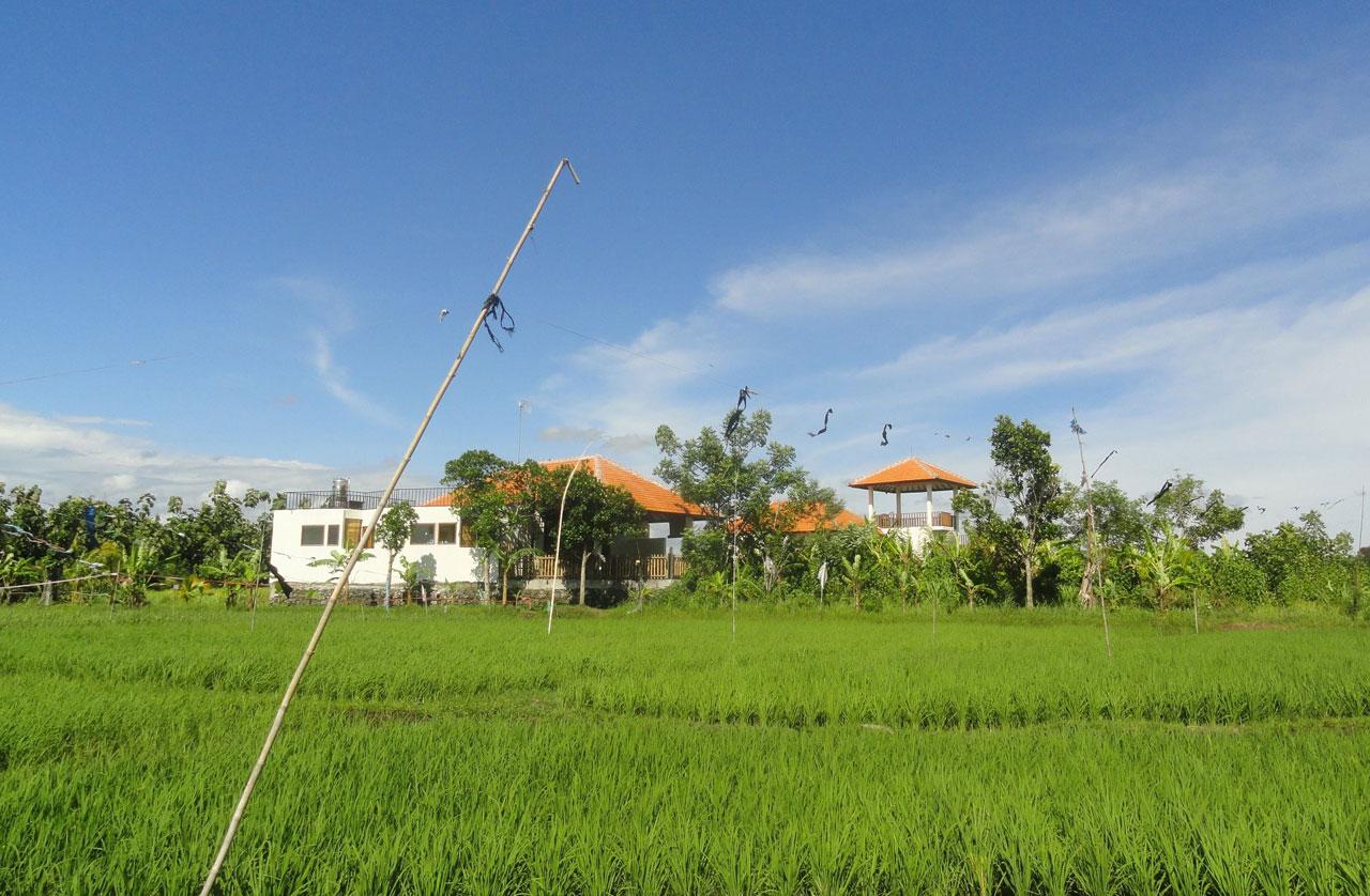 SurfWG Bali surf camp rice fields close to villa tuju